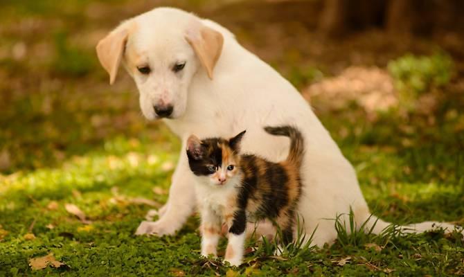 Lultima Tendenza Del Mercato Del Cibo Per Cani E Gatti Sono Gli